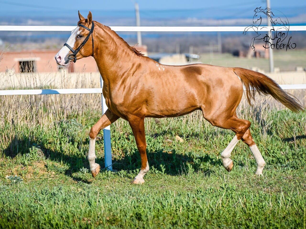 Донская лошадь: особенности разведения и ухода — cельхозпортал