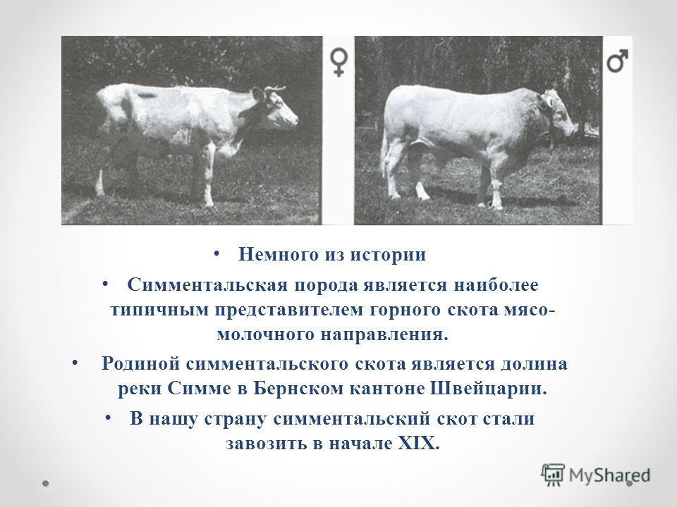 Симментальская порода коров: описание и характеристики породы