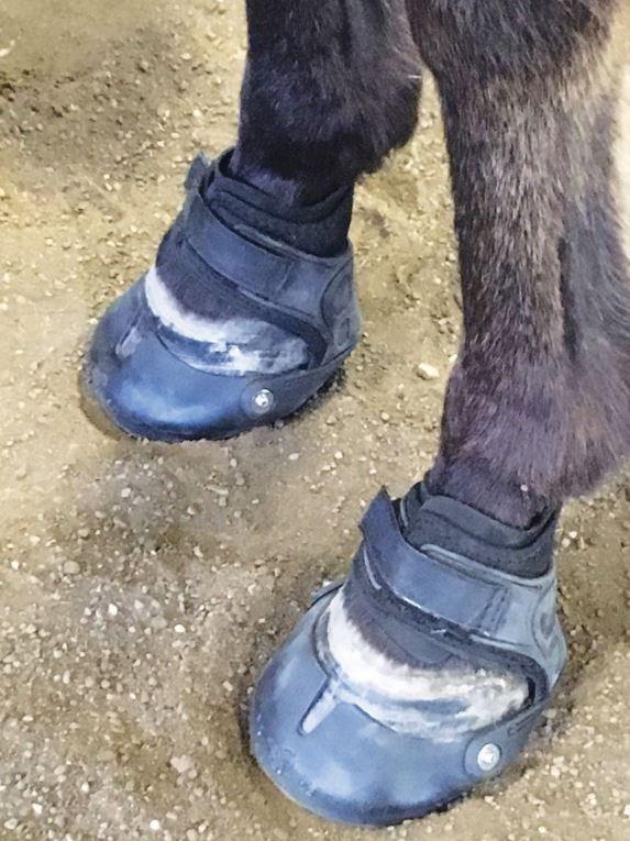 Копыта лошади: особенности строения и уход