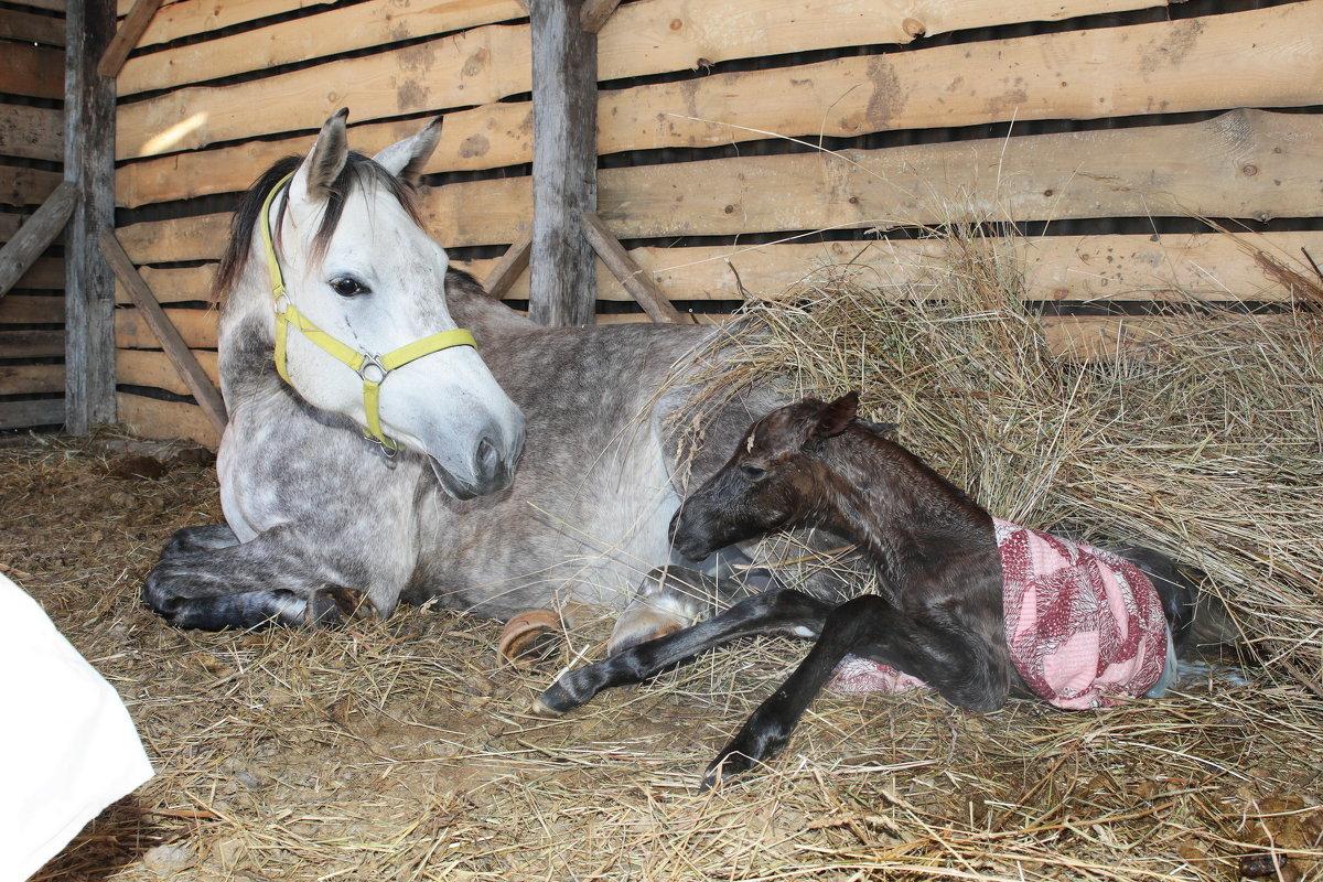 Как быстро откормить лошадь на мясо в домашних условиях