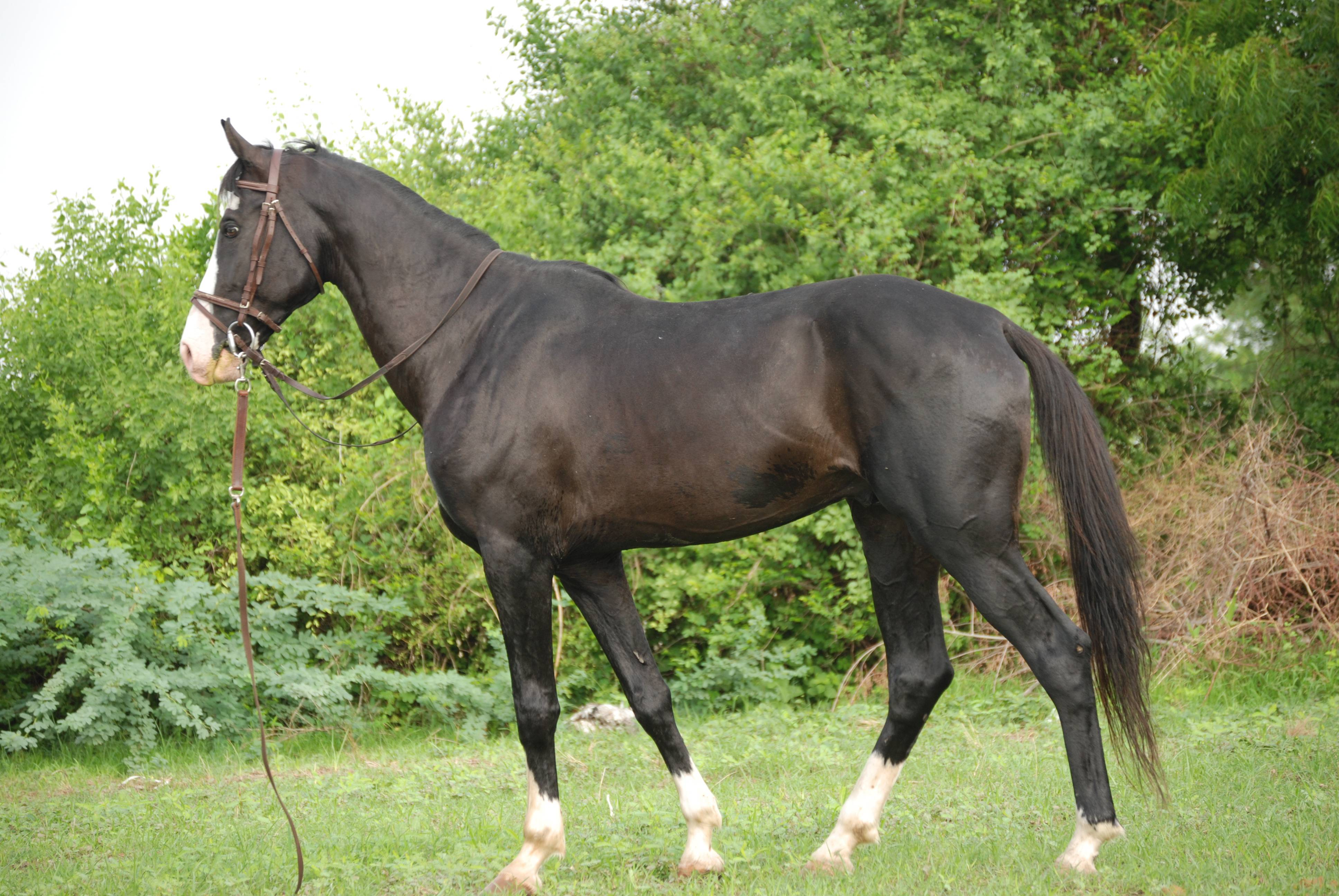 Породы лошадей: фото и описание, характеристика