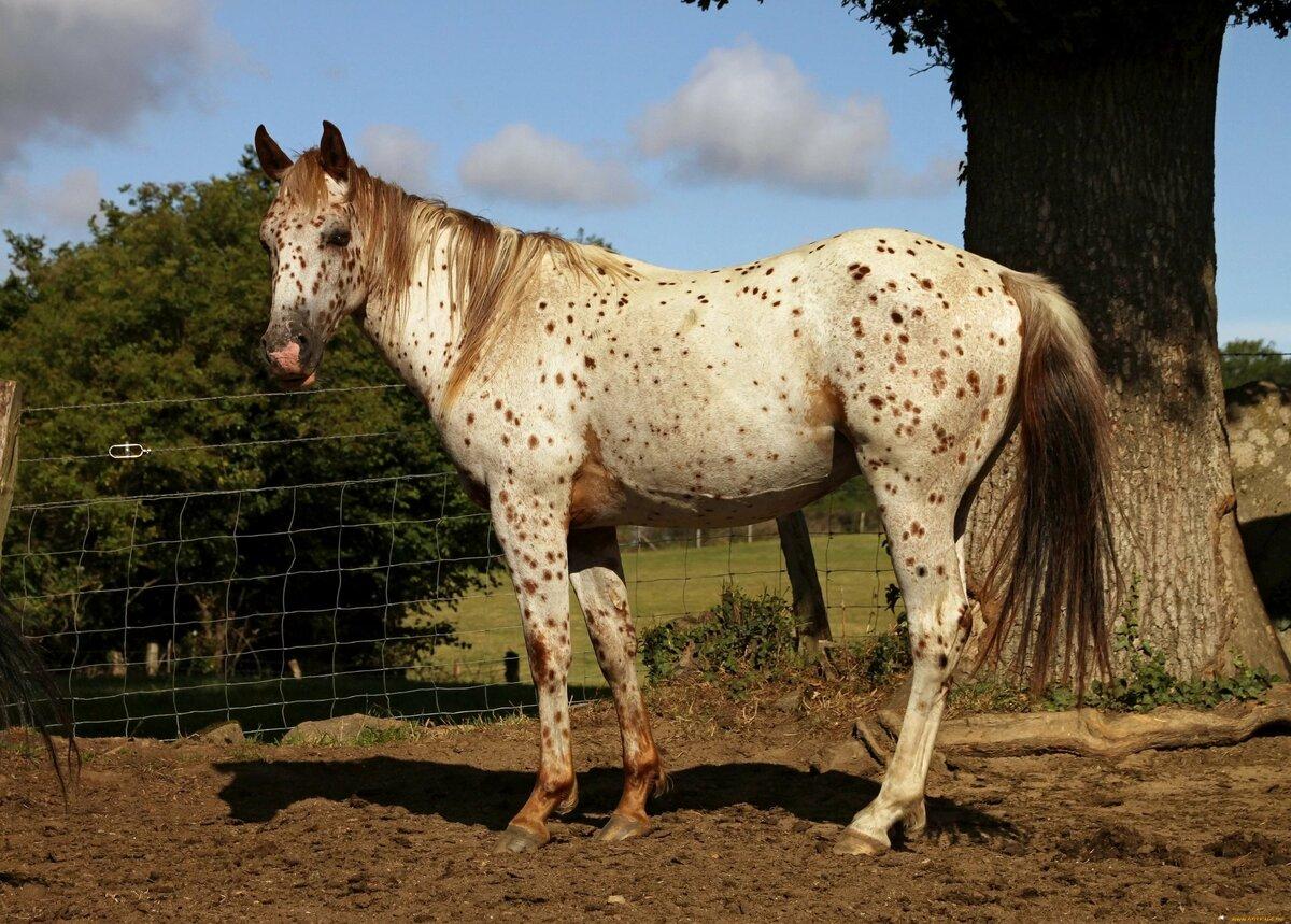 Обзор пегой масти лошадей