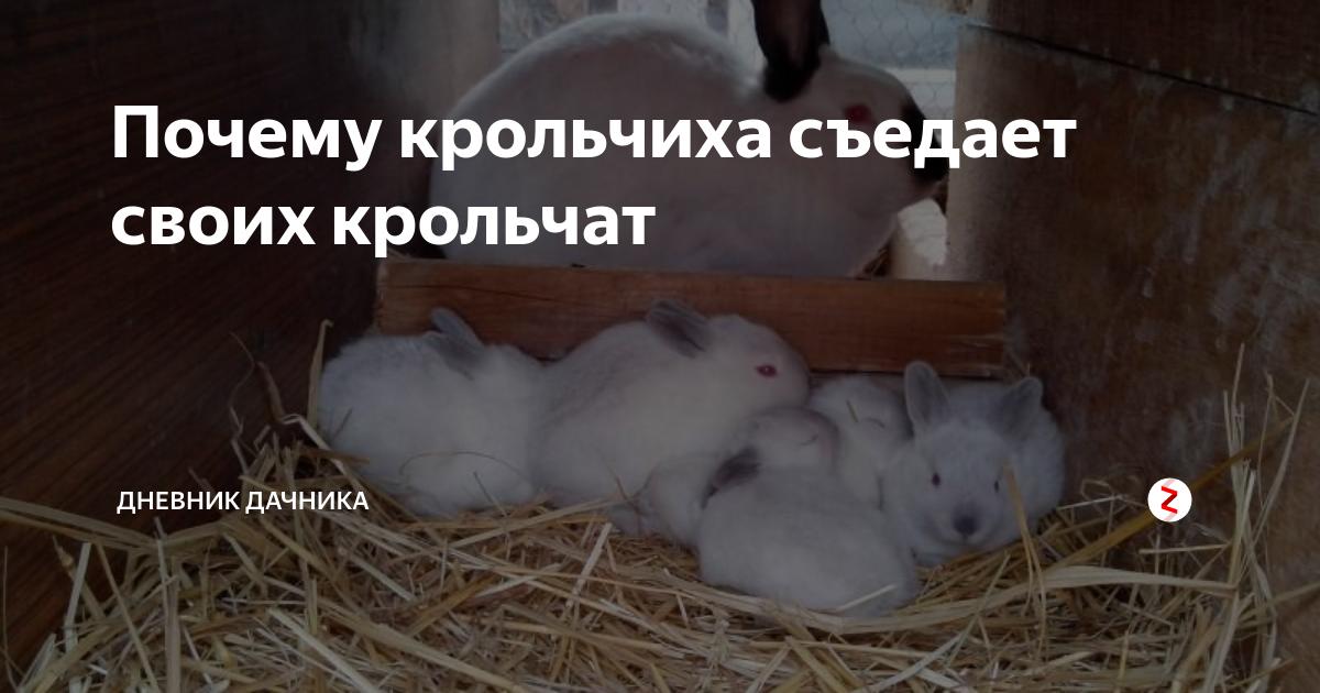Почему крольчиха съедает своих крольчат: причины