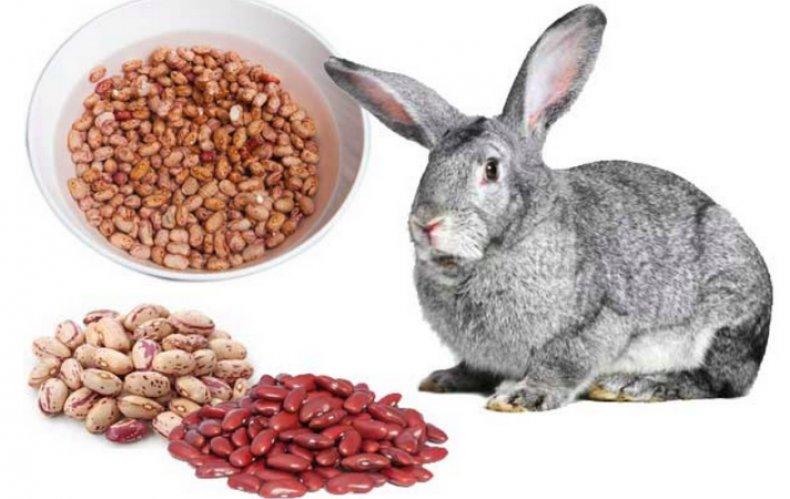 Можно ли кормить кроликов хлебом — польза и вред, как правильно давать