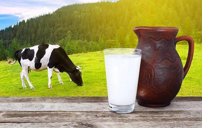 Почему домашнее коровье молоко не скисает: основные причины и правила хранение