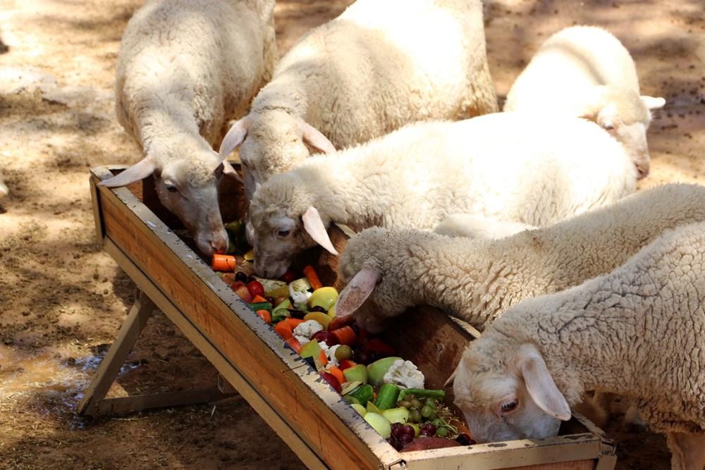Выгодное домашнее овцеводство: недорогое кормление и содержание