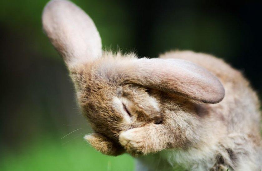 Мохнатые барабанщики: почему кролики стучат задними лапами? — 4 лапки