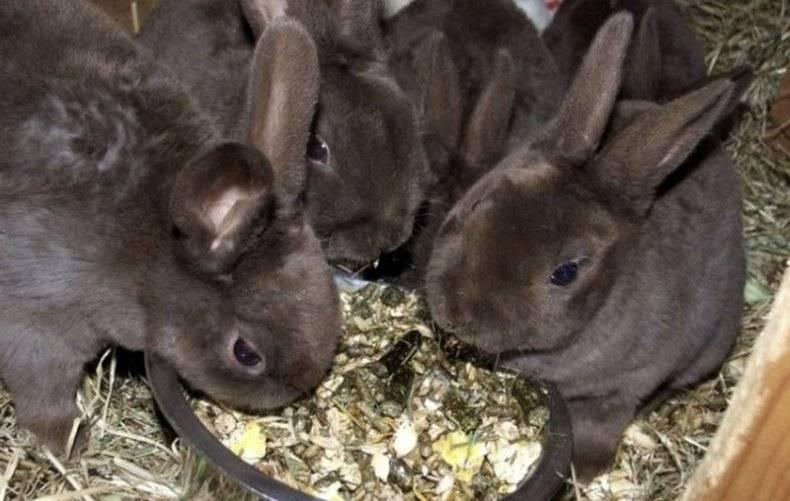 Какие зерна и траву можно давать кроликам