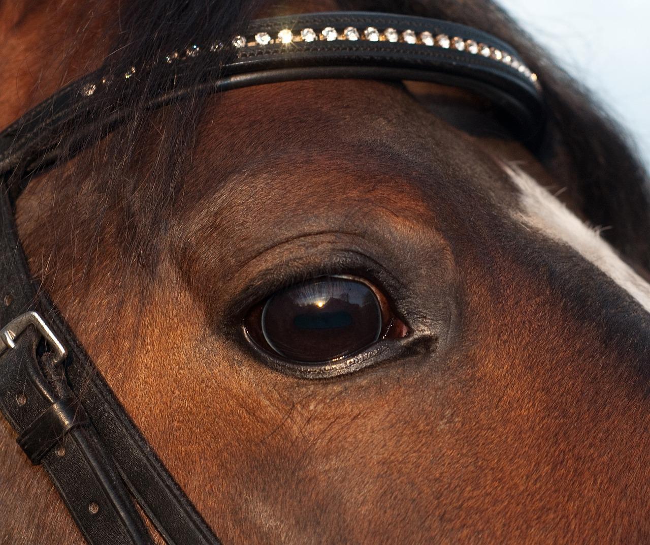 Ветеринария: не закрывайте глаза на глаза лошади! // зм № 1/2004