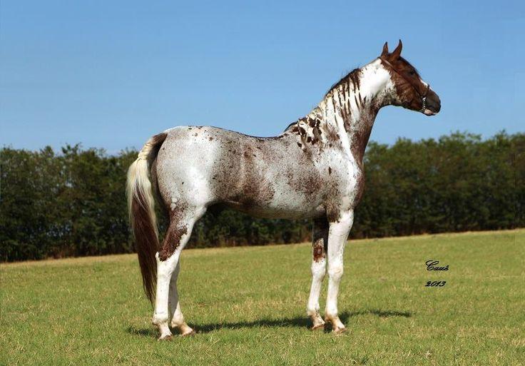 Какими бывают масти лошадей и от чего зависит масть