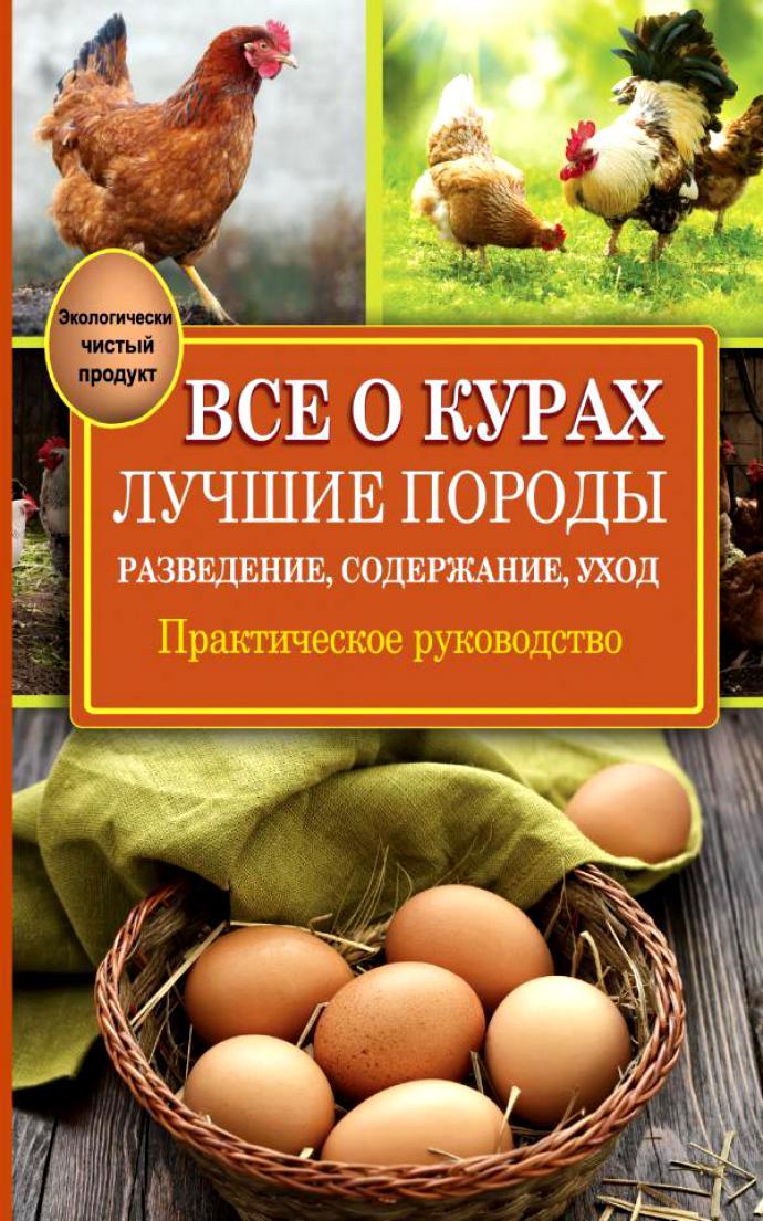О курах породы пушкинская: характеристики, разведение, содержание поголовья