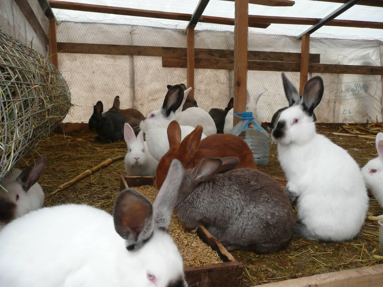 Подселение перепелов к кроликам.
