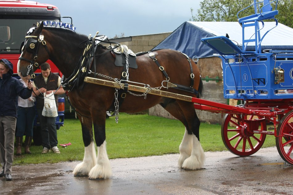 Грузовые тяжеловозные лошади крупных пород