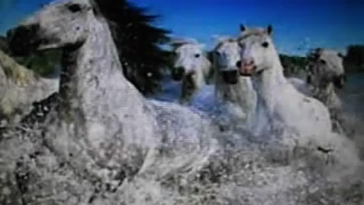 Сонник две лошади в воде во сне