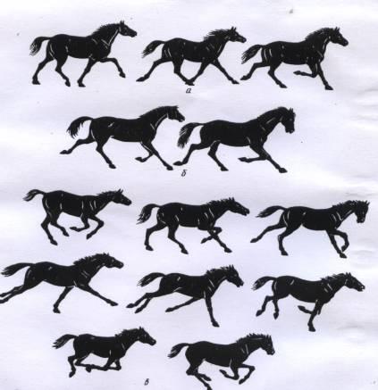 Бег лошади: разновидности рыси, быстрый галоп, конный аллюр