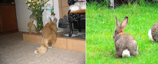 Поведение кроликов: что нужно знать владельцу - наши кролики