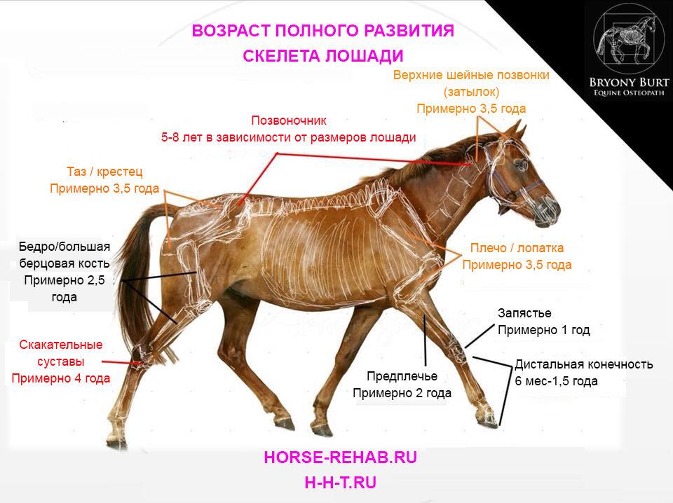 Сколько живут лошадь: что влияет на продолжительность жизни лошадей