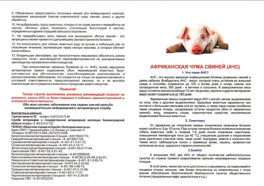 Признаки и методы передачи африканской чумы свиней (ачс)
