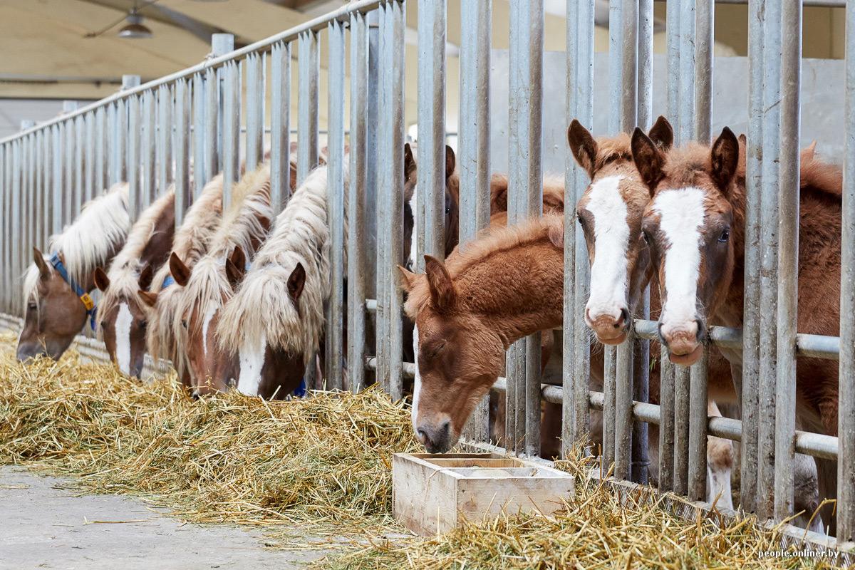 Как откормить лошадь