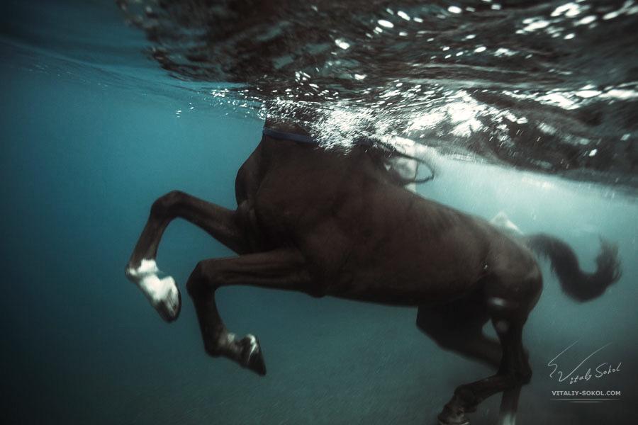 Как спят лошади — лежа или стоя, и почему
