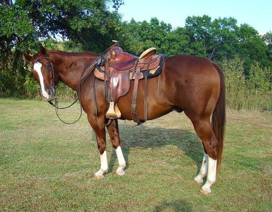 Мерин или жеребец: зачем вообще кастрируют коней