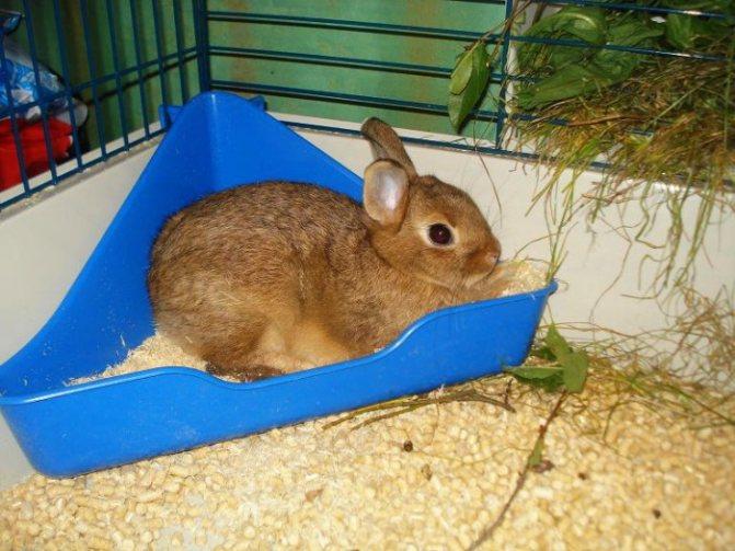 Как приучить кролика к лотку: эффективные способы и полезные рекомендации