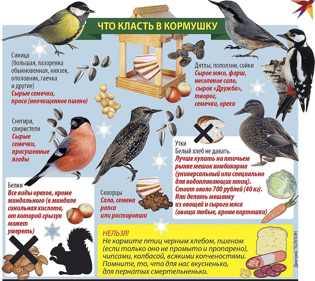 Чем можно кормить домашних, диких уток и как проводить кормление утят