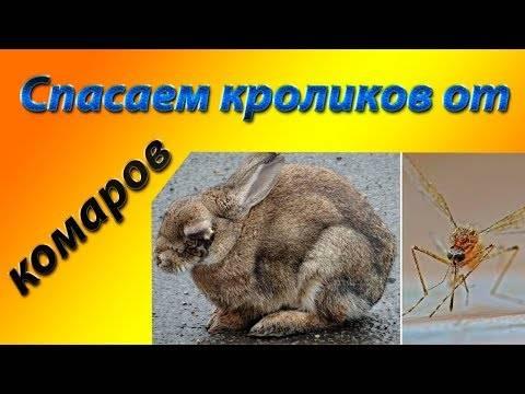 Признаки теплового и солнечного удара у кроликов: что делать в данных случаях