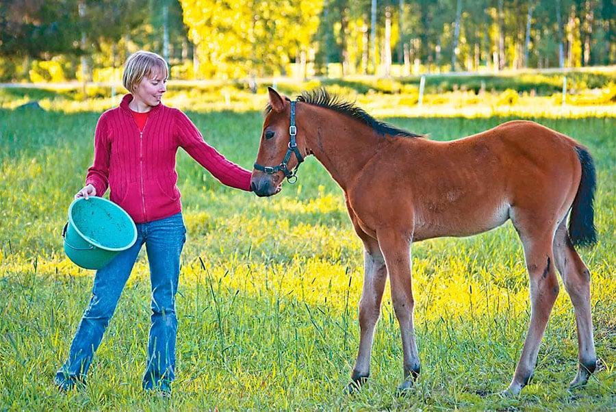 У меня есть лошадь: рассматриваем основы ухода и содержания