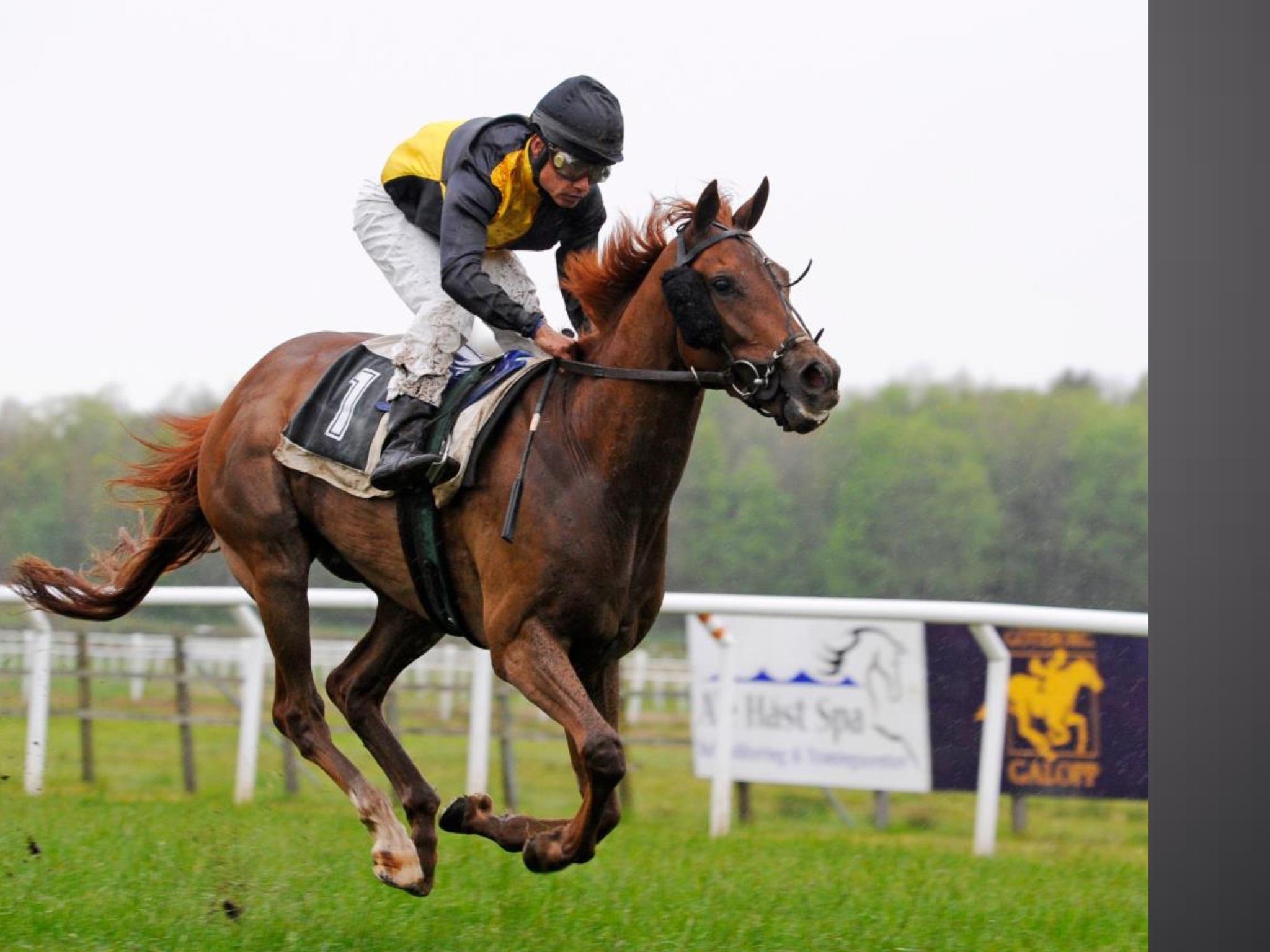 Конный спорт - плюсы и минусы, разновидности конного спорта в наши дни