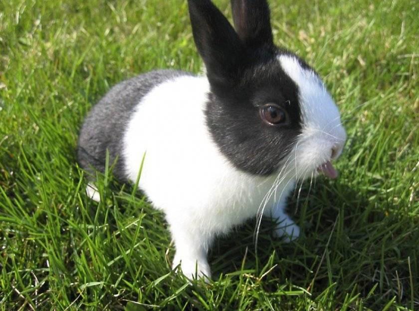 Разведение декоративных кроликов в домашних условиях