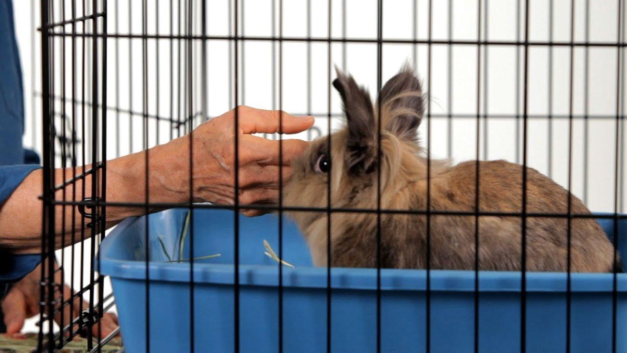 Кролик грызёт деревянную клетку: причины, что делать