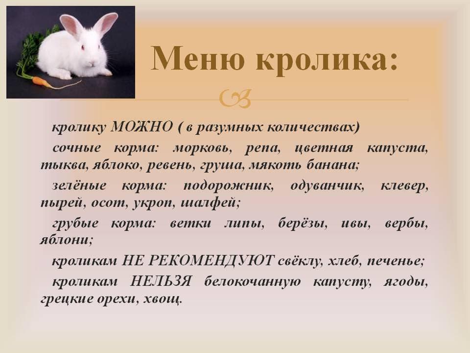 Чем кормить кроликов: для набора веса, после окрола и в разное время года