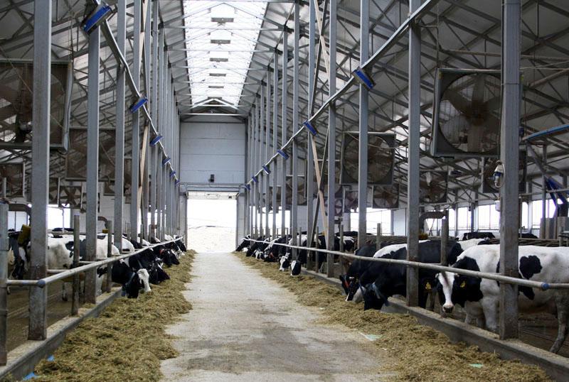 Козья мини-ферма на 10-20 голов - инструкция по строительству