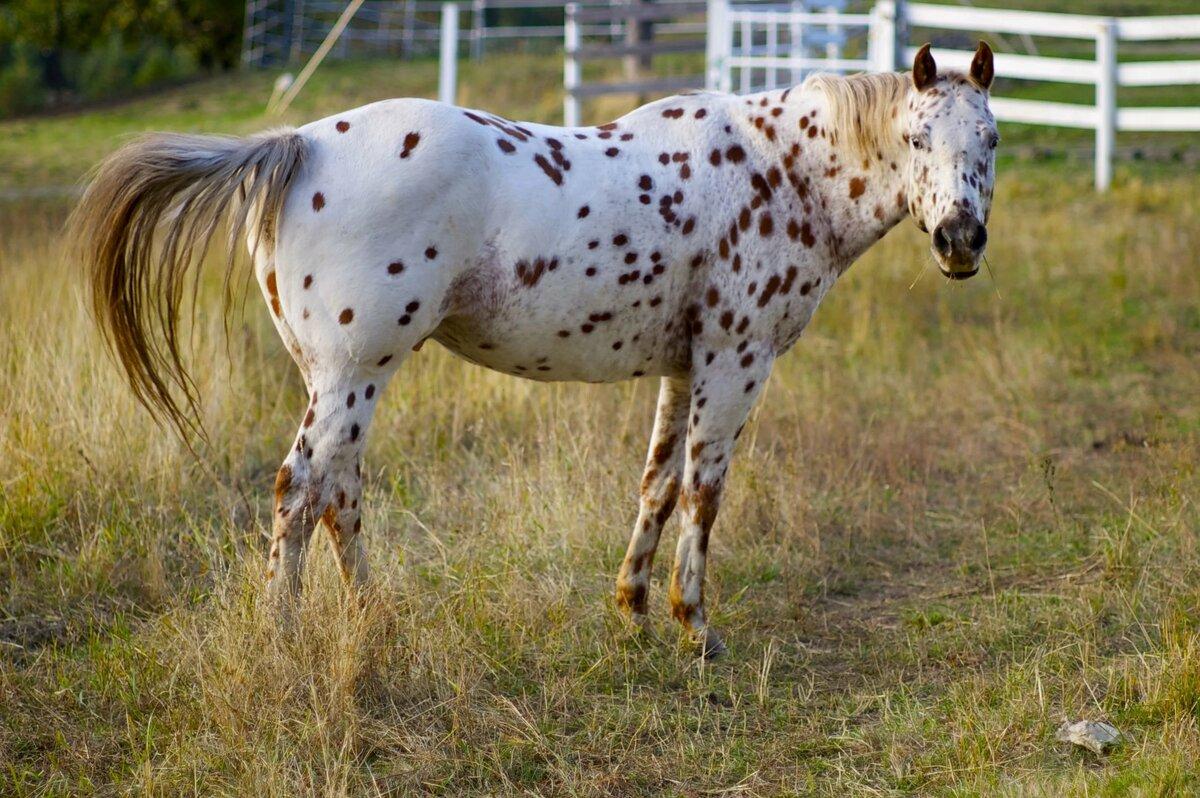 Буланая, саврасая или караковая – разбираем все масти лошадей |