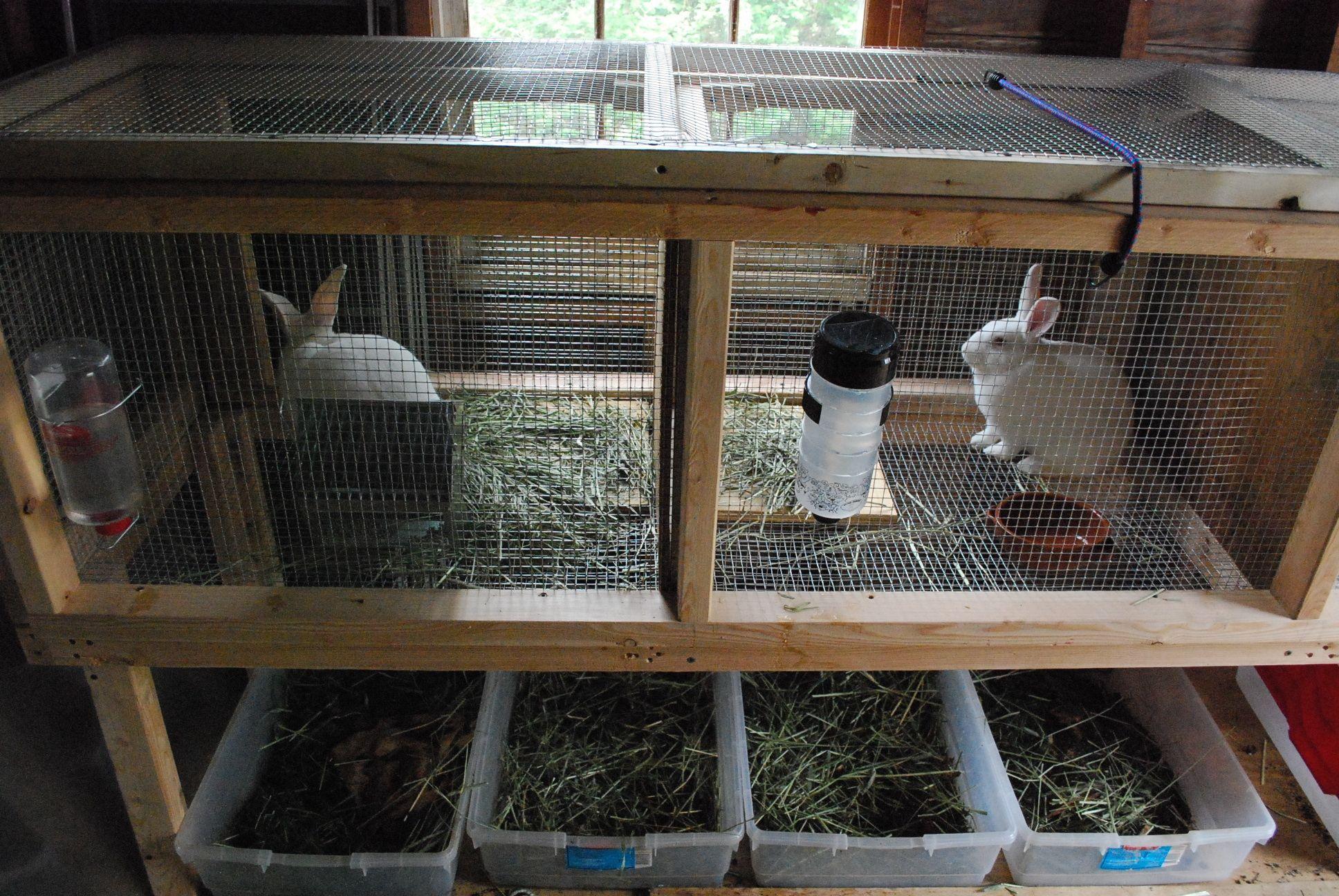 Разведение кроликов в домашних условиях: на что обратить внимание? — cельхозпортал