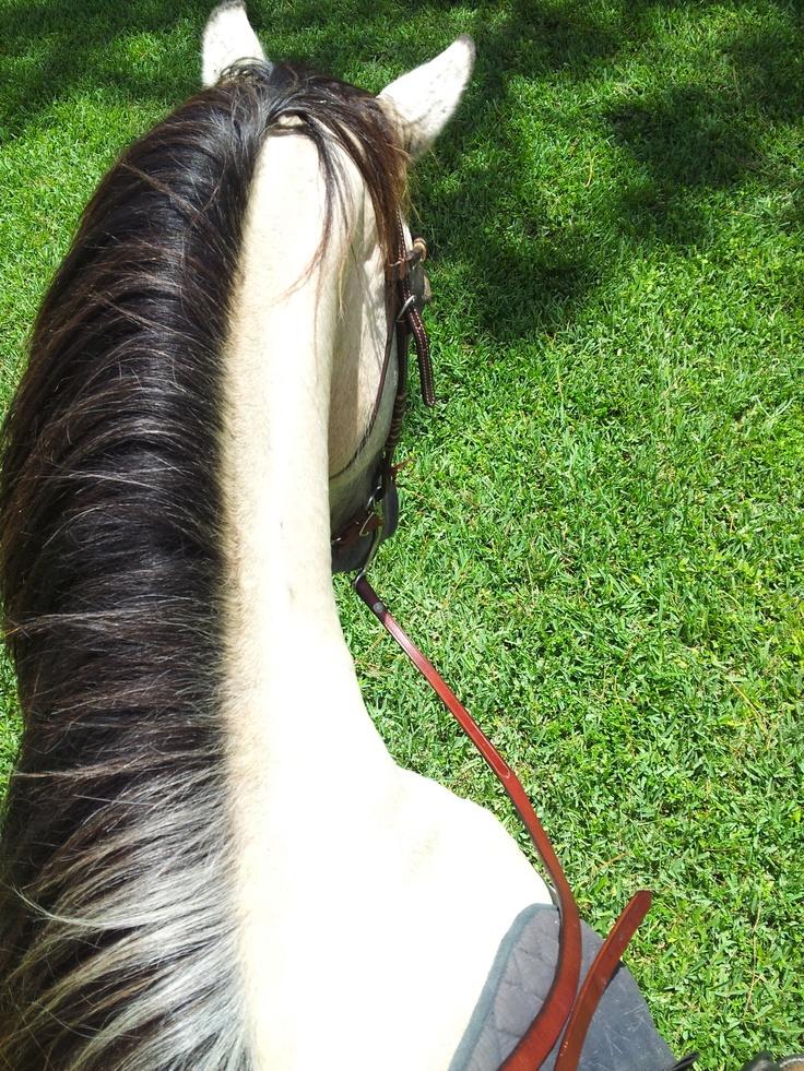 Грива лошади — зачем нужна, как ухаживать (помыть, почистить, подстричь, заплести)