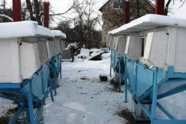 Содержание кроликов зимой на улице: способы и преимущества