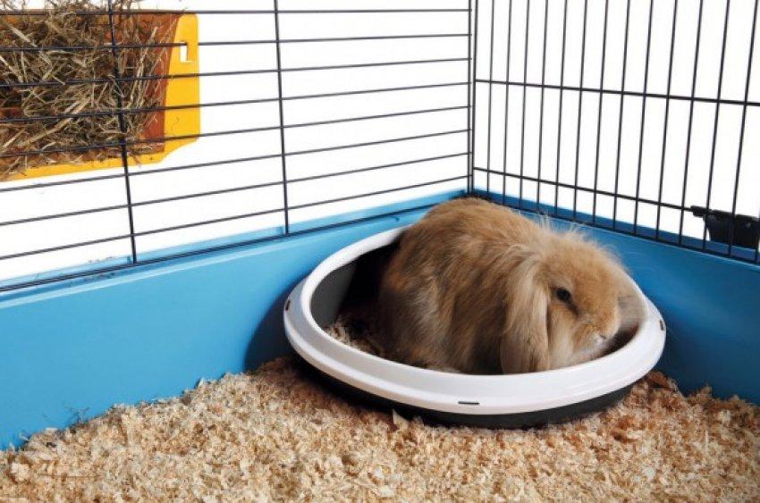 Как быстро приучить кролика к поилке