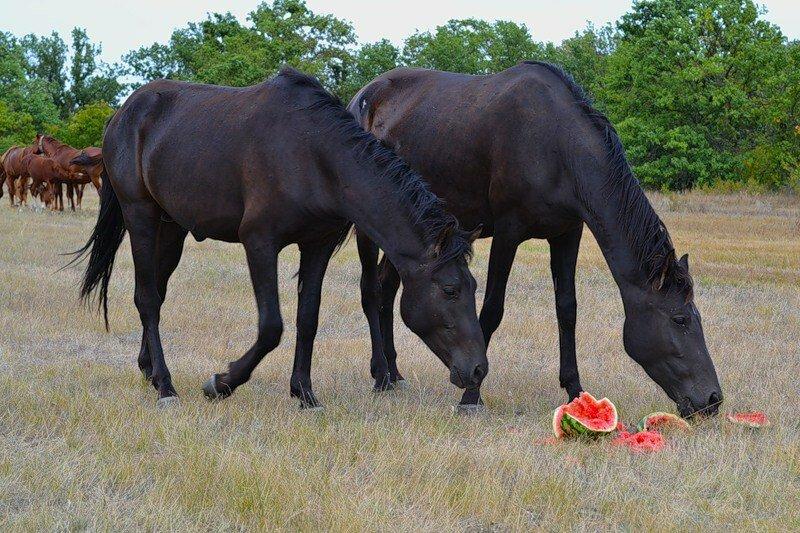 Что едят лошади и чем их кормить: полезные советы и фото