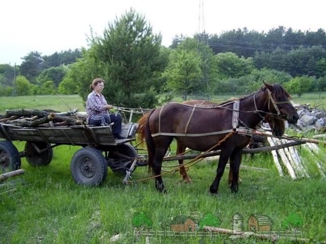 Как запрягать лошадь: принадлежности для упряжи, последовательность, способы