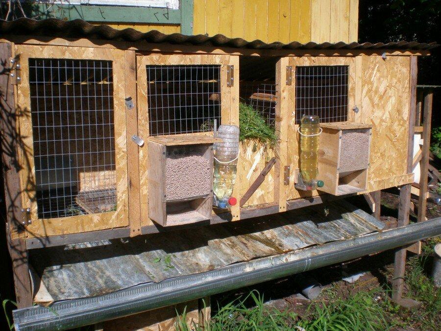 Содержание кроликов в сарае – лучший способ создать благоприятные условия