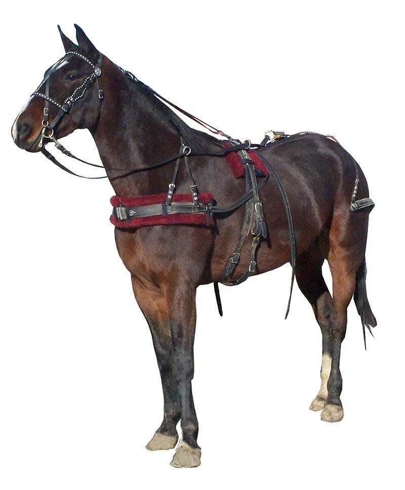 Конская сбруя – неотъемлемая часть снаряжения ездовой лошади  