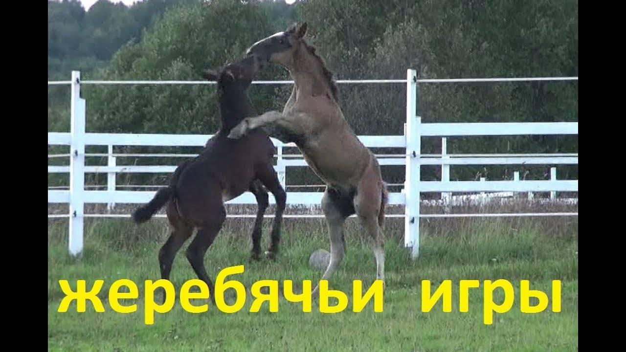 Дрессировка лошадей • ru.knowledgr.com