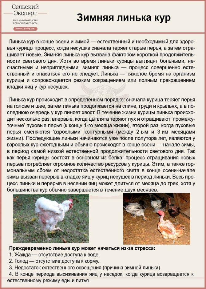 Главные правила кормления кур
