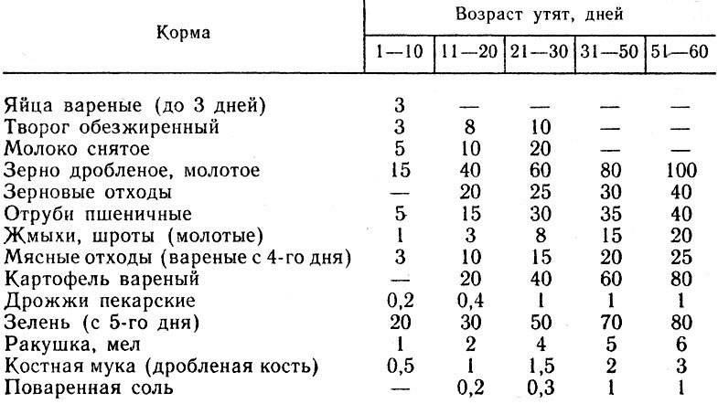 Особенности и правила содержания уток в зимний период