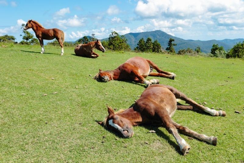 Как спят лошади? описание, фото и видео  - «как и почему»