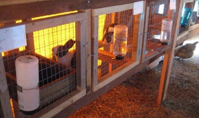 ✅ содержание кролика зимой на улице: утепление клетки, чем кормить, размножение - tehnomir32.ru