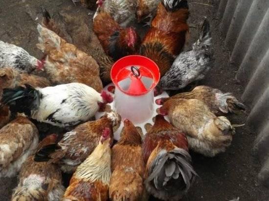 Причины гибели кур