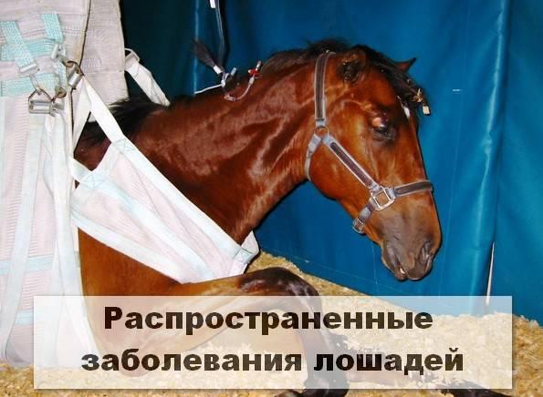 Случная болезнь лошадей: диагностика, лечение, профилактика